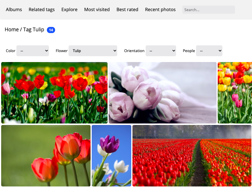 plugin moteur recherche piwigo